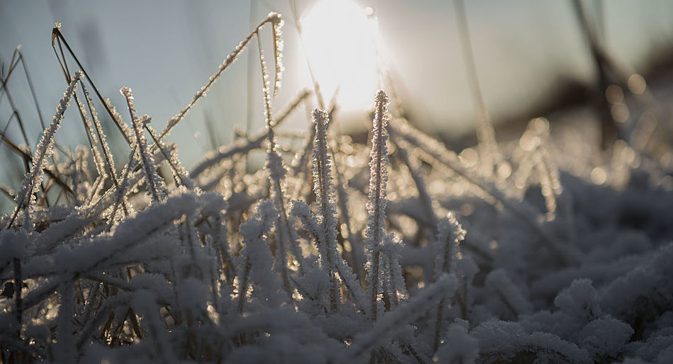 2017 Abstract Art Winter View ArtWork Close-up Cold Cold Day Cold Temperature Early Spring EyeEm Best Shots EyeEm Nature Lover EyeEmNewHere Frost Frosty Mornings Ice Ice Cristal Macro Macro_collection Rim Snow Snowing Sun Sunlight Winter Winter Background