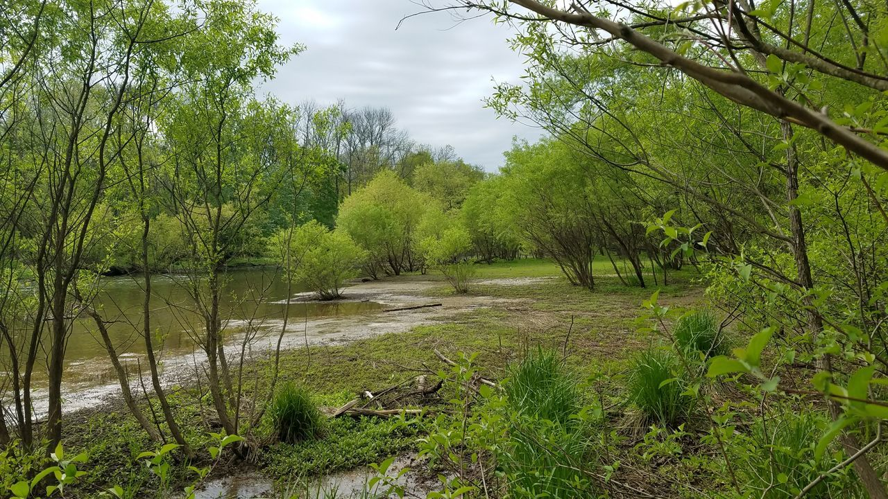 Beauty In Nature Branch Day Forest Grass Green Color Growth Landscape Nature No People Outdoors River Scenics Sky Tranquil Scene Tranquility Tree Water