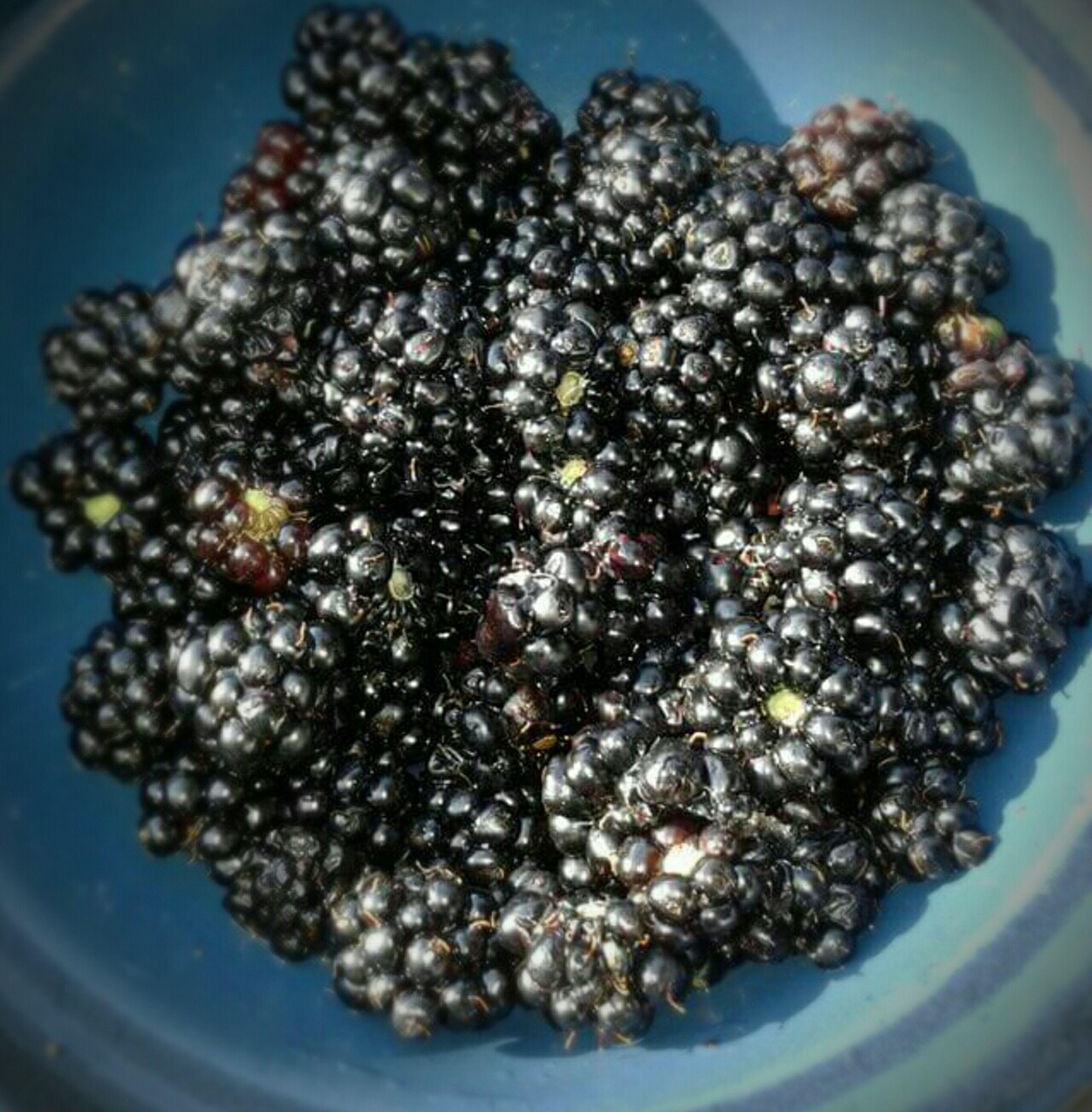 Blueberries that i Handpicked . Yummy Littlefruits Natureisamazing Natureislife