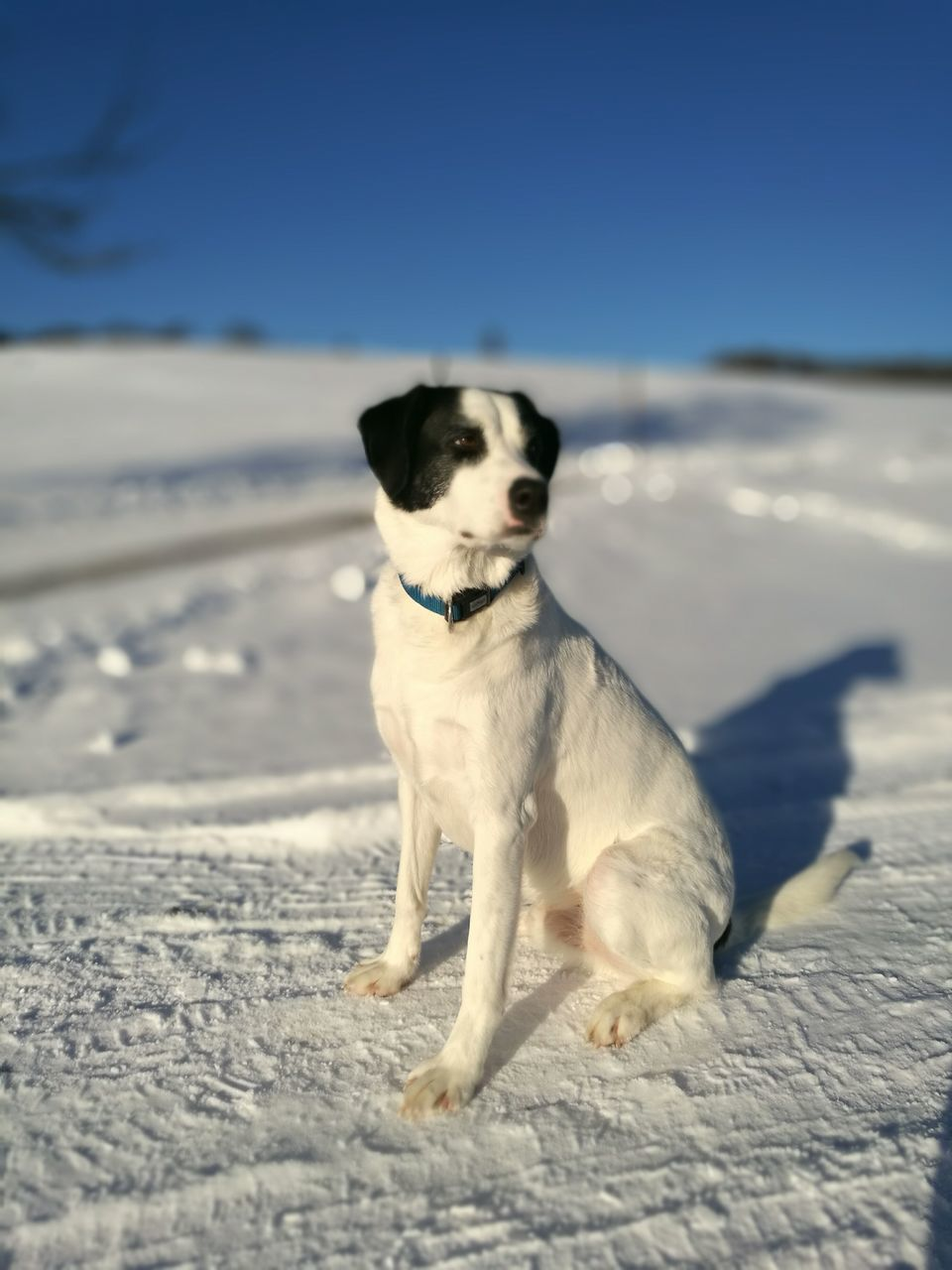 dog, pets, domestic animals, one animal, animal themes, mammal, beach, sand, outdoors, nature, sunlight, no people, day, winter, full length, sitting, snow