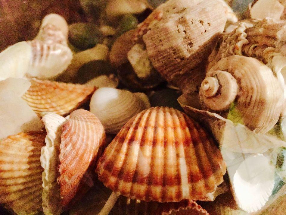 My Passion ❤ Italia italy Hello World Mare E Sole mare Mare Nostrum Mare ❤ Conchiglie Conchiglie Marine