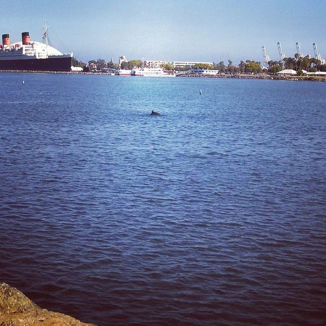 Dolphin swimming in the mouth of the Los Angeles River