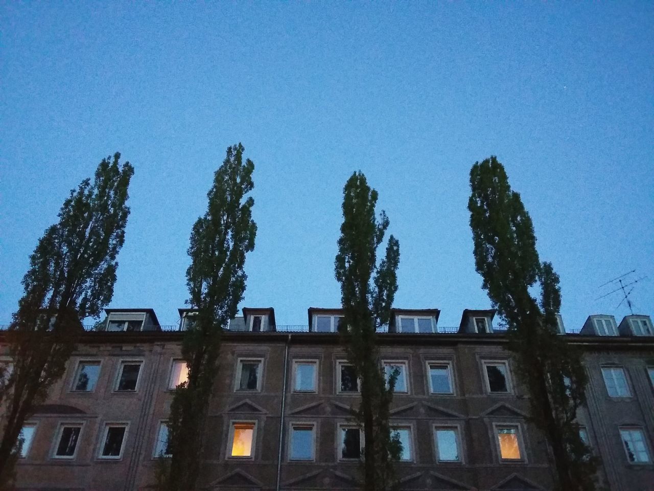 residential building behind poplars. · Munich München germany buildings Architecture urban landscape poplar Trees trees and sky tree crowns dusk nightfall blue Light apartment lights
