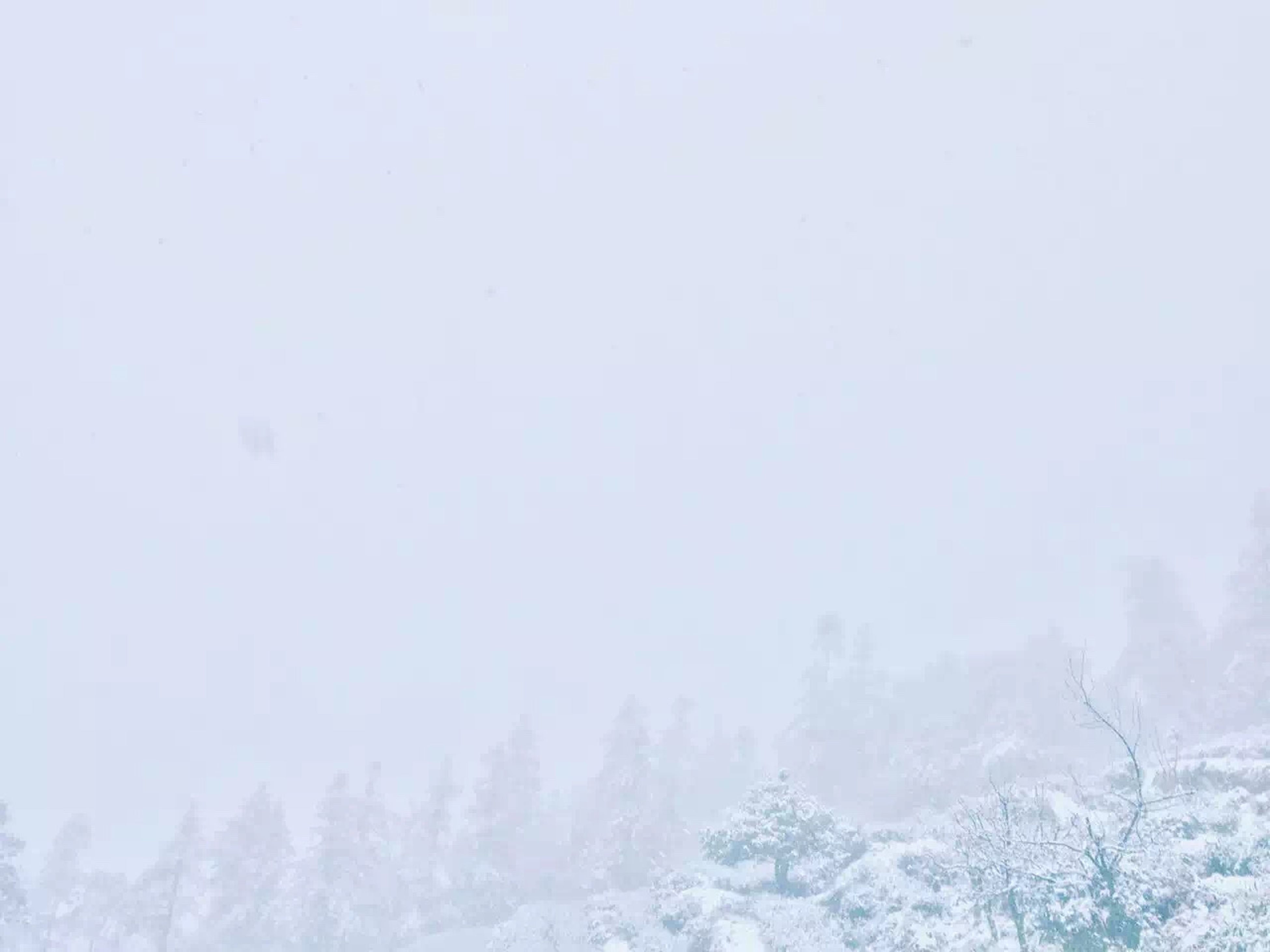 winter, cold temperature, snow, season, weather, covering, frozen, beauty in nature, white color, tranquility, scenics, nature, tranquil scene, clear sky, copy space, covered, tree, non-urban scene, idyllic
