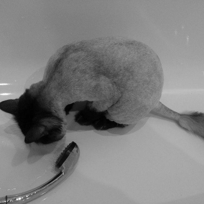 В принципе ничего не изменилось, как пил, так и пьет! мау Бусек любовь Cat кот котяра вода забавно мило like