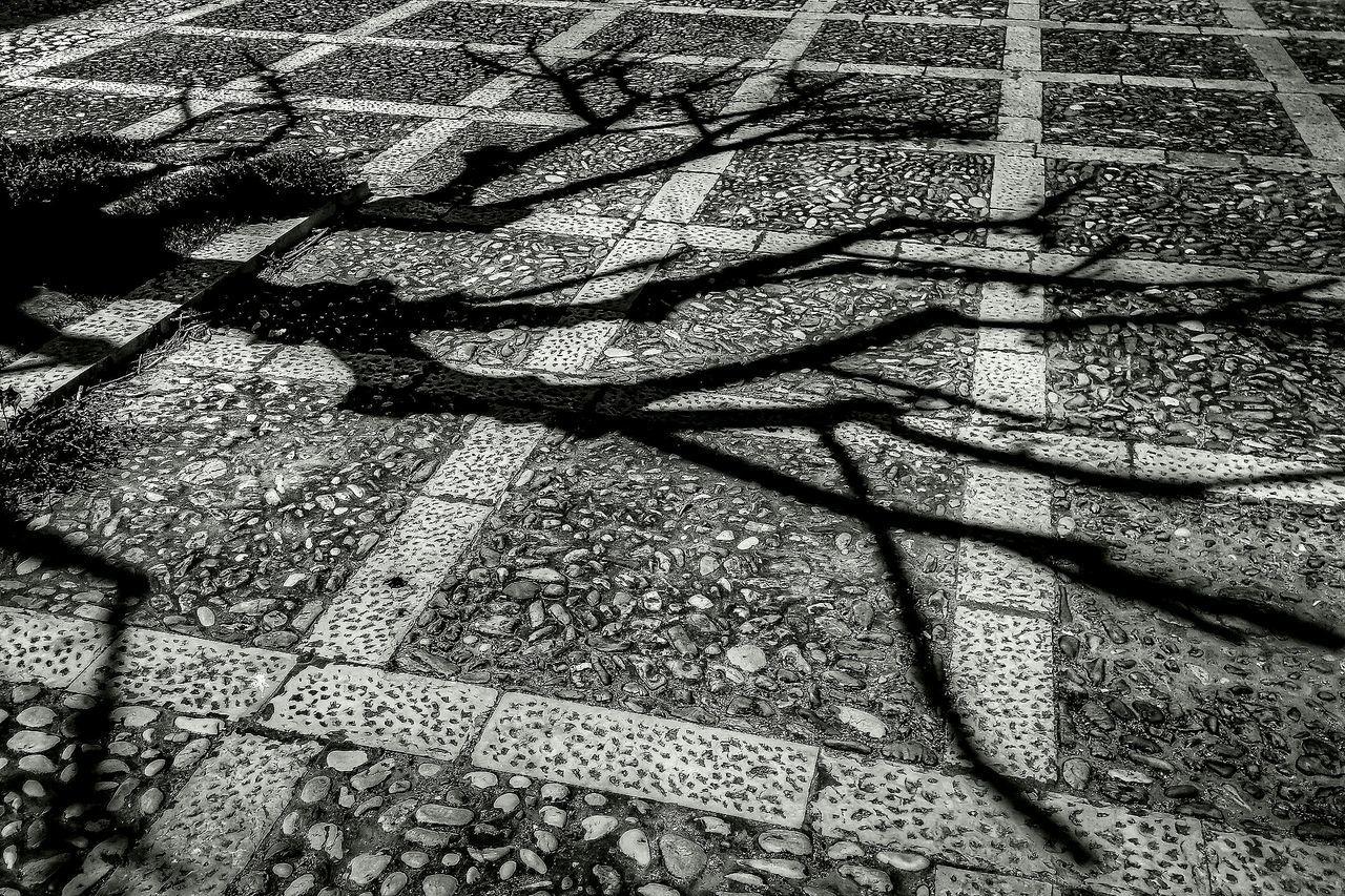 High Angle View Of Tree Shadow On Floor