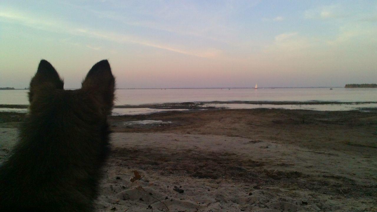 Немного погодя кота, сменил пес Landscape Relaxing Nature