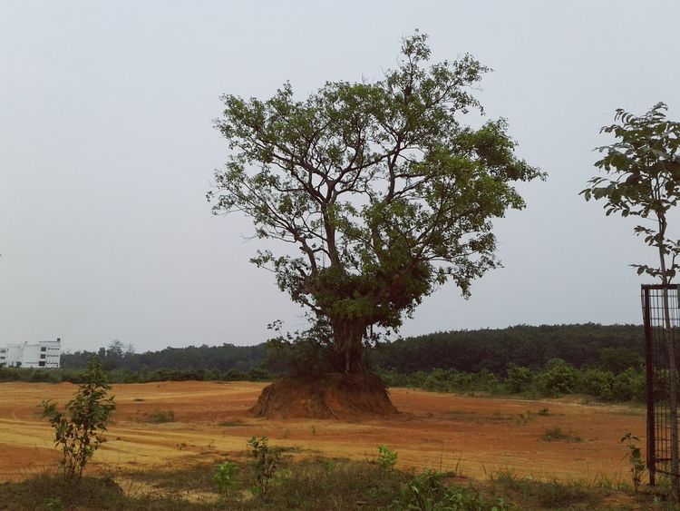 A lost tree Nature Deforestation Smartphonephotography Globalwarming Outdoor Longride