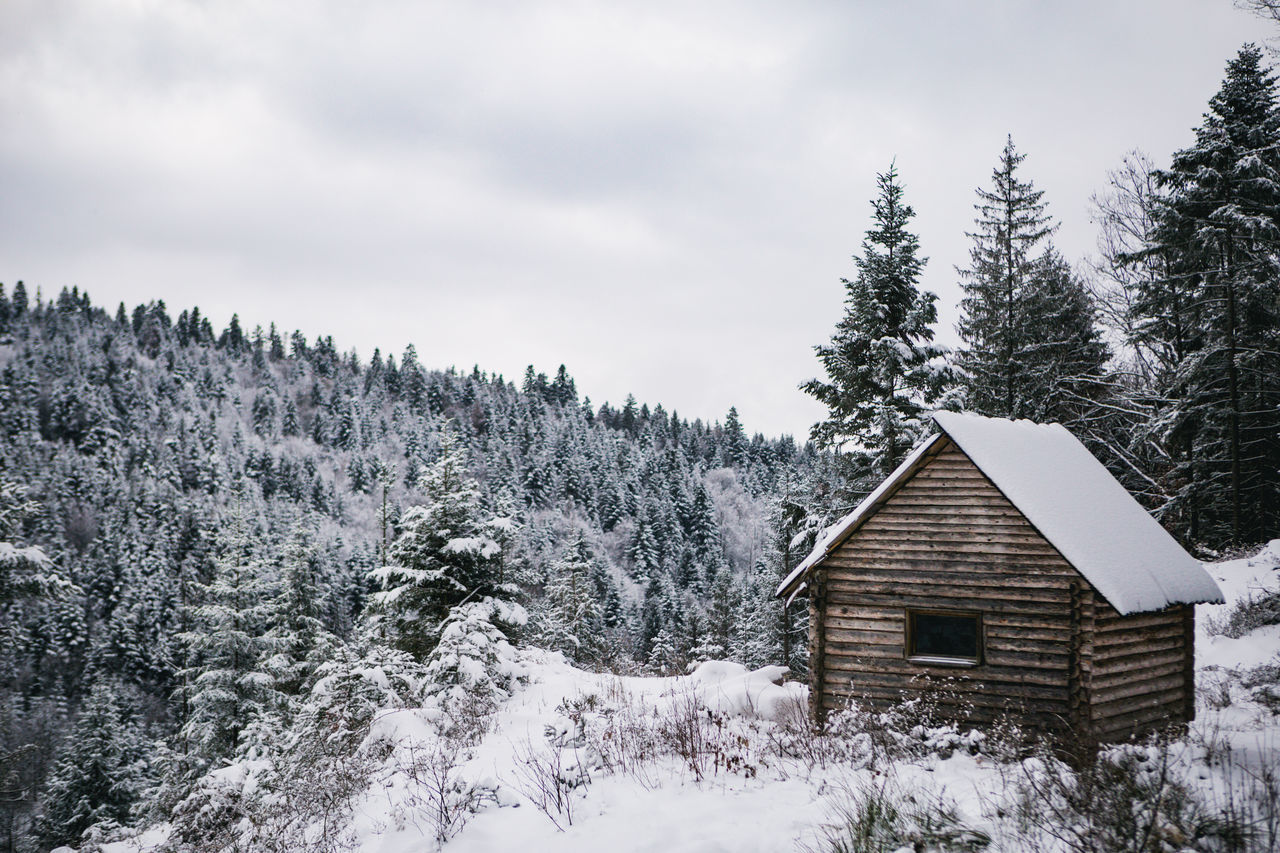 Architecture Building Exterior Built Structure Chalet Cold Temperature Cottage Day Forest Holiday House Log Cabin Nature Nature No People Outdoors Pinaceae Pine Tree Pine Woodland Scenics Sky Snow Tree Vacations Winter WoodLand
