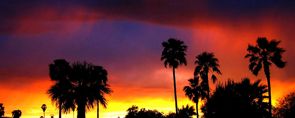 Beauty In Nature Cloud - Sky Growth Nature No People Orange Color Outdoors Palm Tree Scenics Silhouette Sky Sunset Tranquil Scene Tranquility Tree Tree Trunk