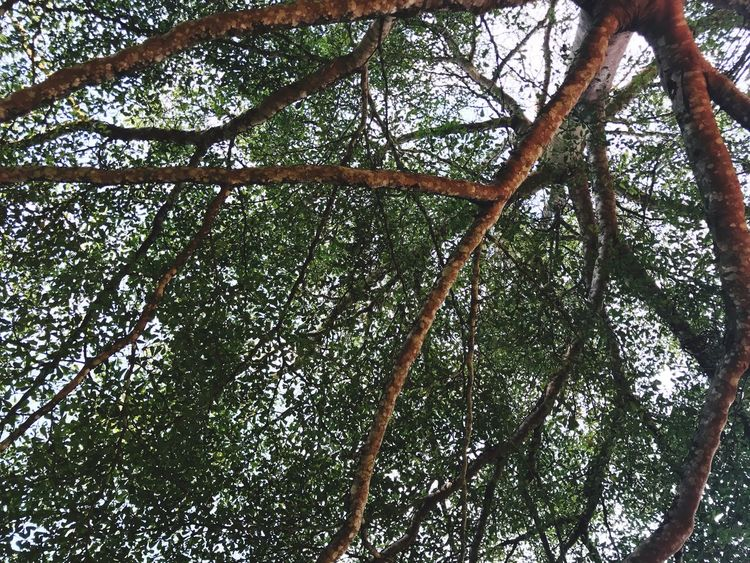 Plant Tree Branch Forest No People Green Color Outdoors Growth Leaf Tree Trunk Nature Day Sky