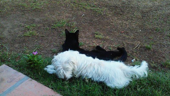 EyeEmAnimalLover Buddiesforlife Brotherfromanothermother Ivegoturback Summerdogs Blackcats Best Friends ❤ Cute Pets EyeEm Pets