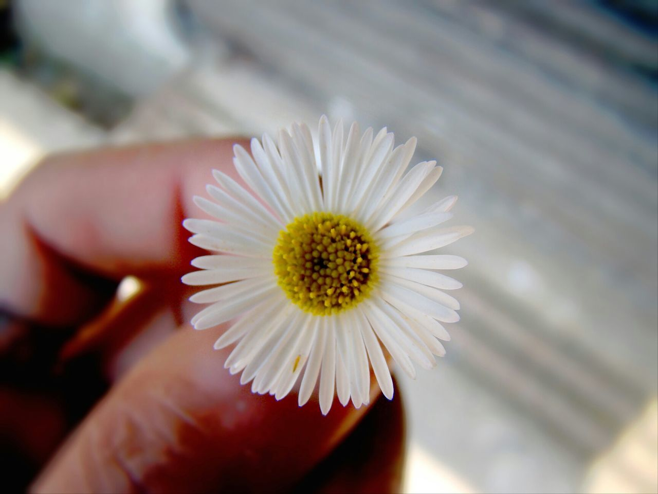 Deceptively Simple Imrankhaan Nature Imrankhaan Flower
