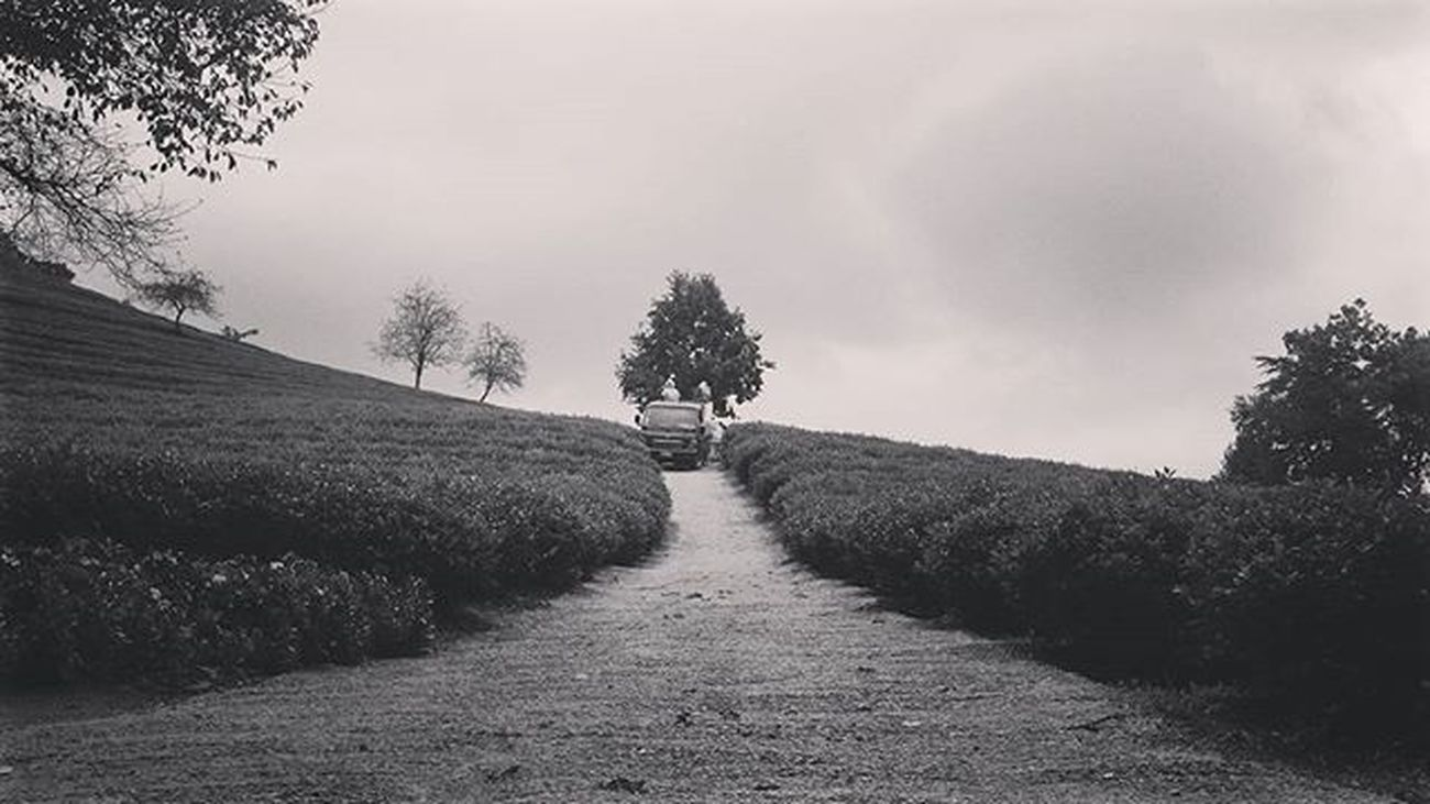 So.. Fill your head with what's important and be done with all the rest. Make every second count. . . Korea ASIA Travel Mytravelgram TBT  Blackandwhite Boseong Tea Green Travelgram Picoftheday Bnw Bestphoto Southkorea 보성 한국 여행 여행사진 여행에미치다 대한민국 Likes Quote Instamood Instagood