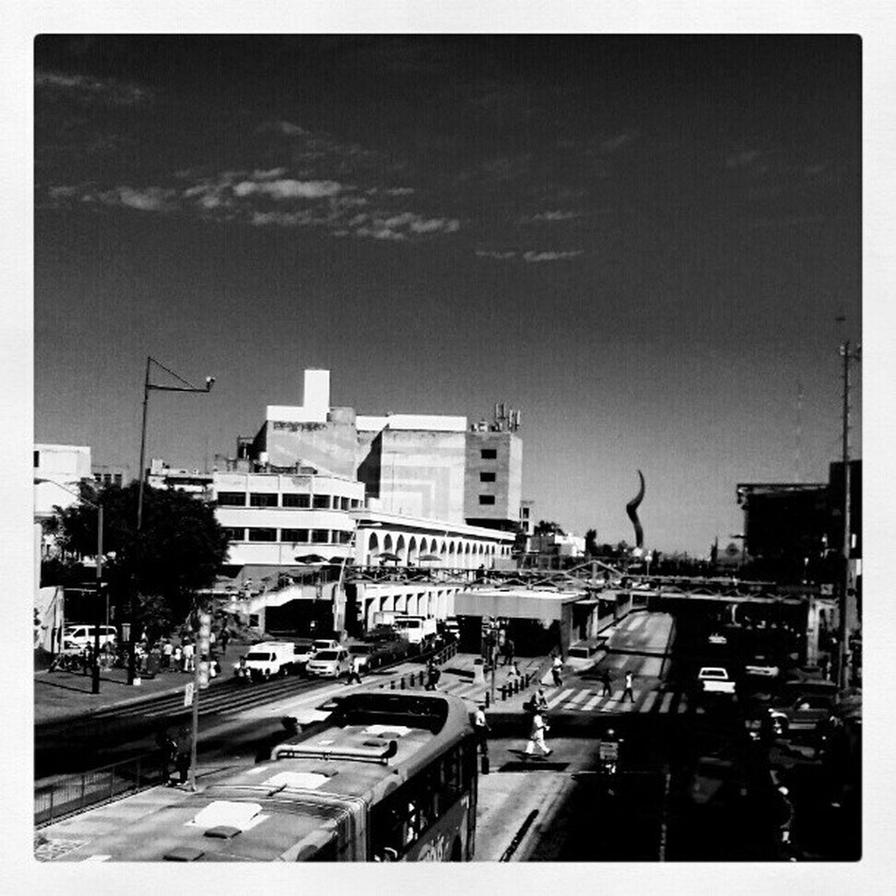 Guadalajara Amazing Macrobuss