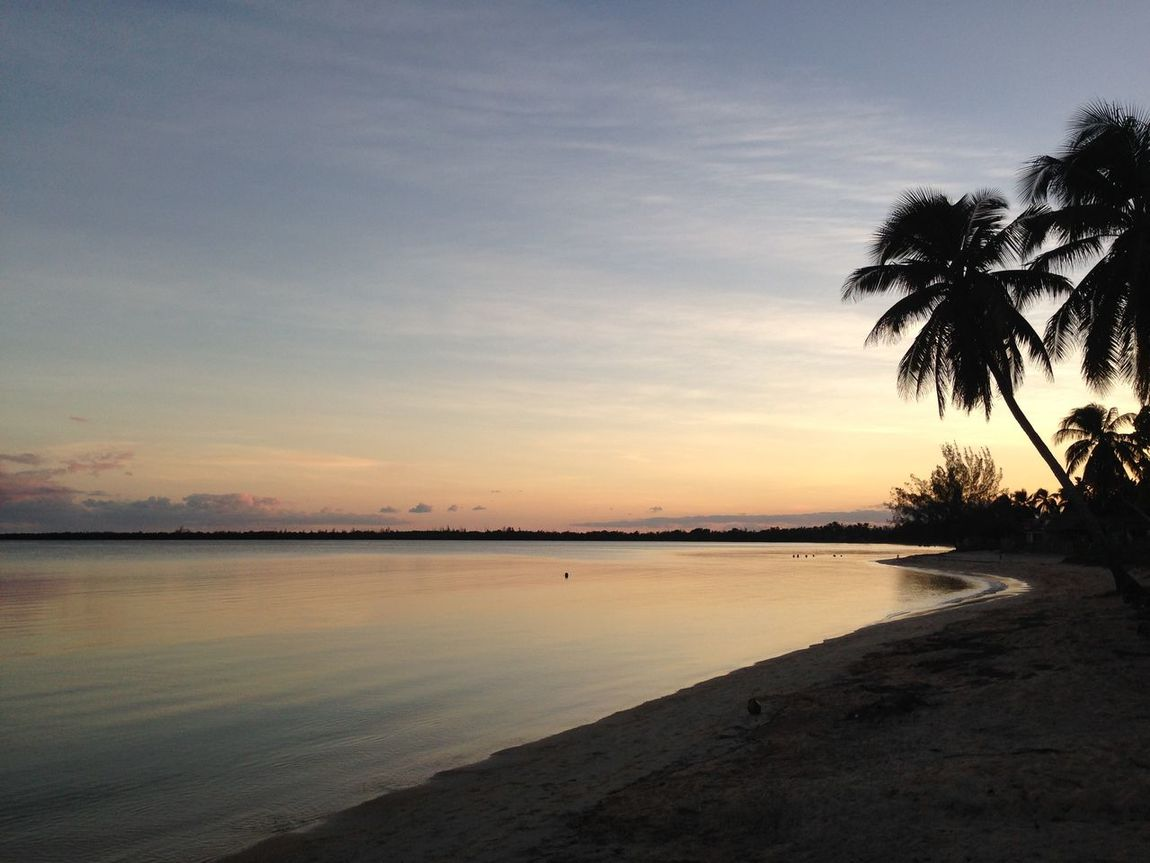 Bay of pigs, Gulf of Cazones, Southern Cuba Aftersunset Beach BeachSunset Beauty In Nature Carribean Cuba Horizon Over Water Nature No People Outdoors Palm Tree Scenics Sea Sky Sunset Sunset Over Beach Sunset Over Water Tranquility Tree Water