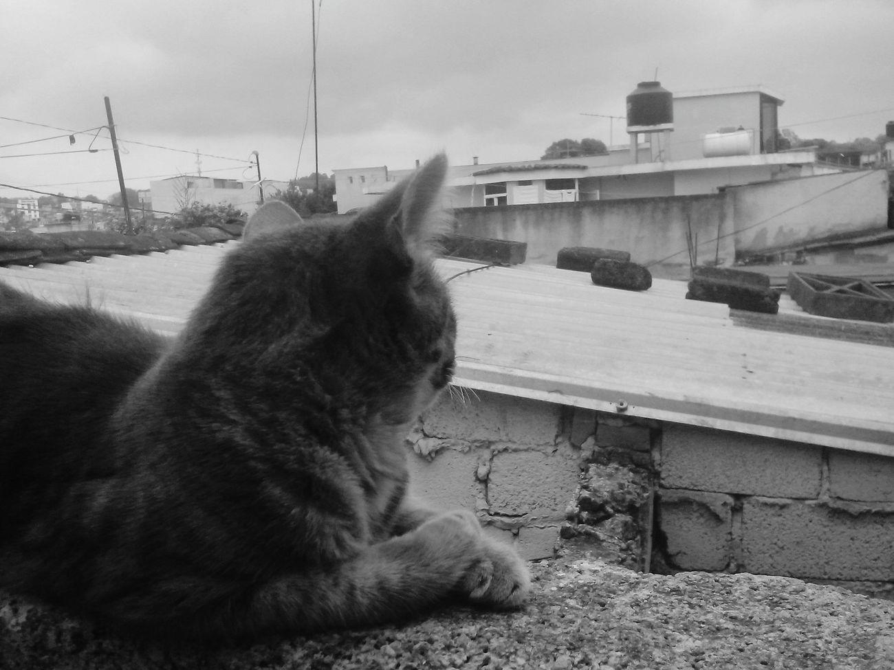 Photooftheday EyeEm Best Edits First Eyeem Photo Taking Photos TheDay Cat