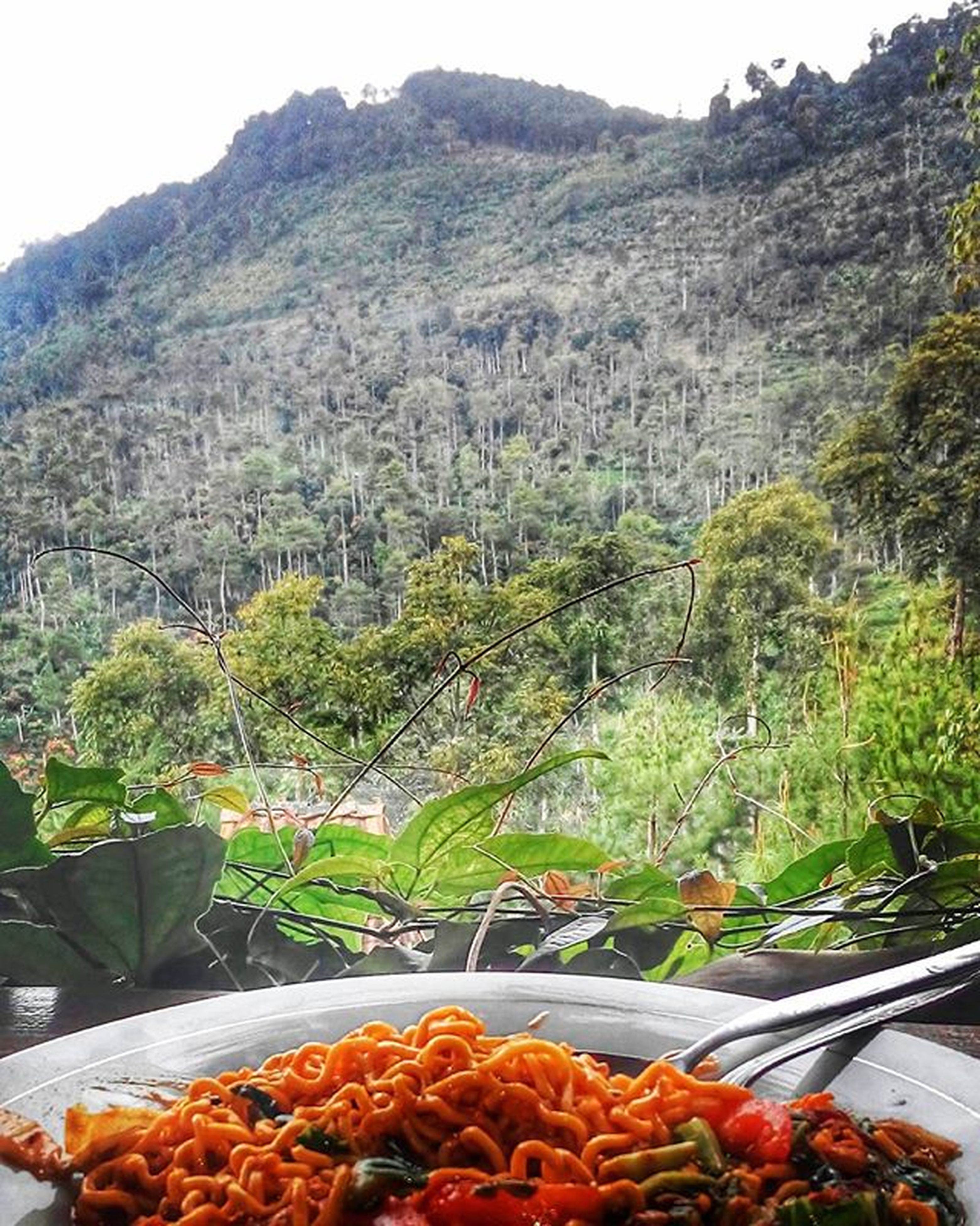 food and drink, mountain, food, freshness, tree, healthy eating, scenics, tranquil scene, tranquility, nature, high angle view, beauty in nature, mountain range, day, growth, leaf, no people, landscape, plant, sunlight