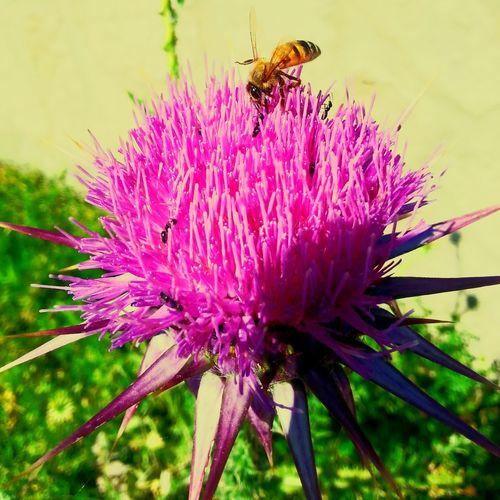 Eye4photography  OpenEdit Popular Photos Nature_collection Bee Flowerporn Summer ☀ Hello World Pictureoftheday EyeEm Nature Lover