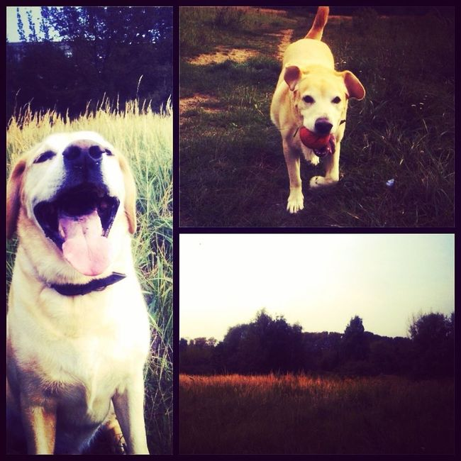 die letzen angenehmen tag genießen Autumn Labrador Realax :) Berlin