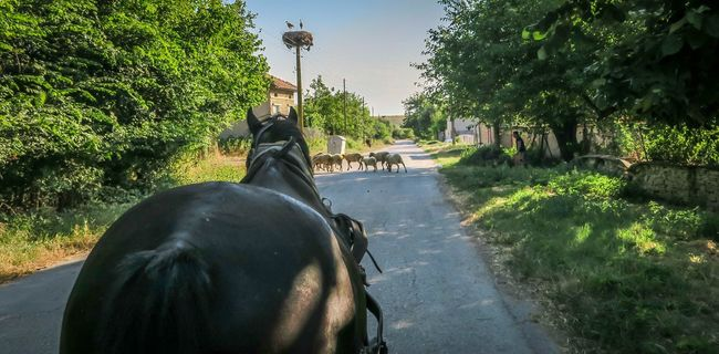 Village Photography Horse