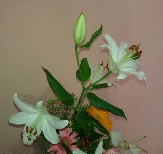 Flower Flower Head Plant No People Nature Indoors  Beauty In Nature Close-up Fragility Herbal Medicine Day Freshness