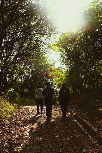 Wild Sunshine Forrest RePicture Leadership