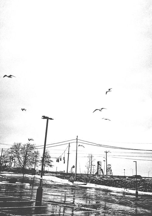More birds.... Blackandwhite Black And White Black & White Blackandwhite Photography Seagull Seagulls Caught In The Wind Wind Windy Windy Day Blustery Day Gusty Birds In Flight Flock Of Birds Flock Flock Of Gulls Stratford CT New England  USA IPhoneography Iphonephotography February Parking Lot Winter