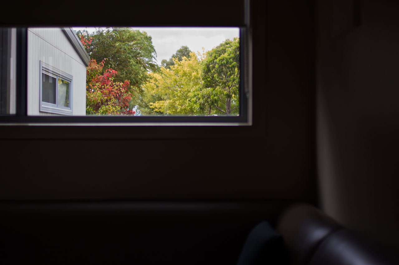 Autumn Autumn Colors Cabin Cabin In The Woods Couch Frame Home Interior Indoors  Silouette Tree Window Window Frame Window Framed Window Sill Window View Windows