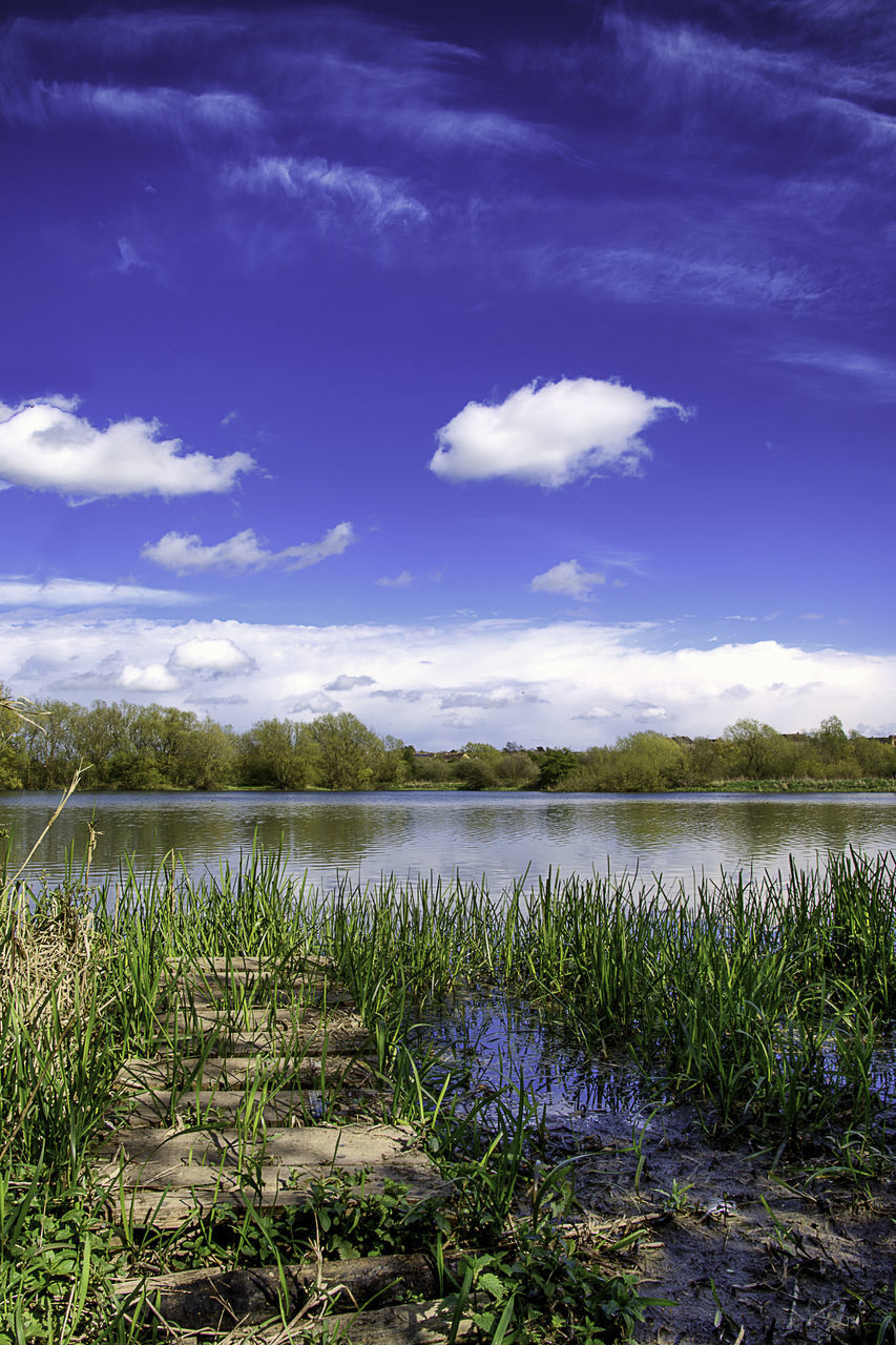 nature, tranquility, growth, sky, lake, beauty in nature, scenics, water, cloud - sky, tranquil scene, outdoors, no people, plant, day, landscape, grass
