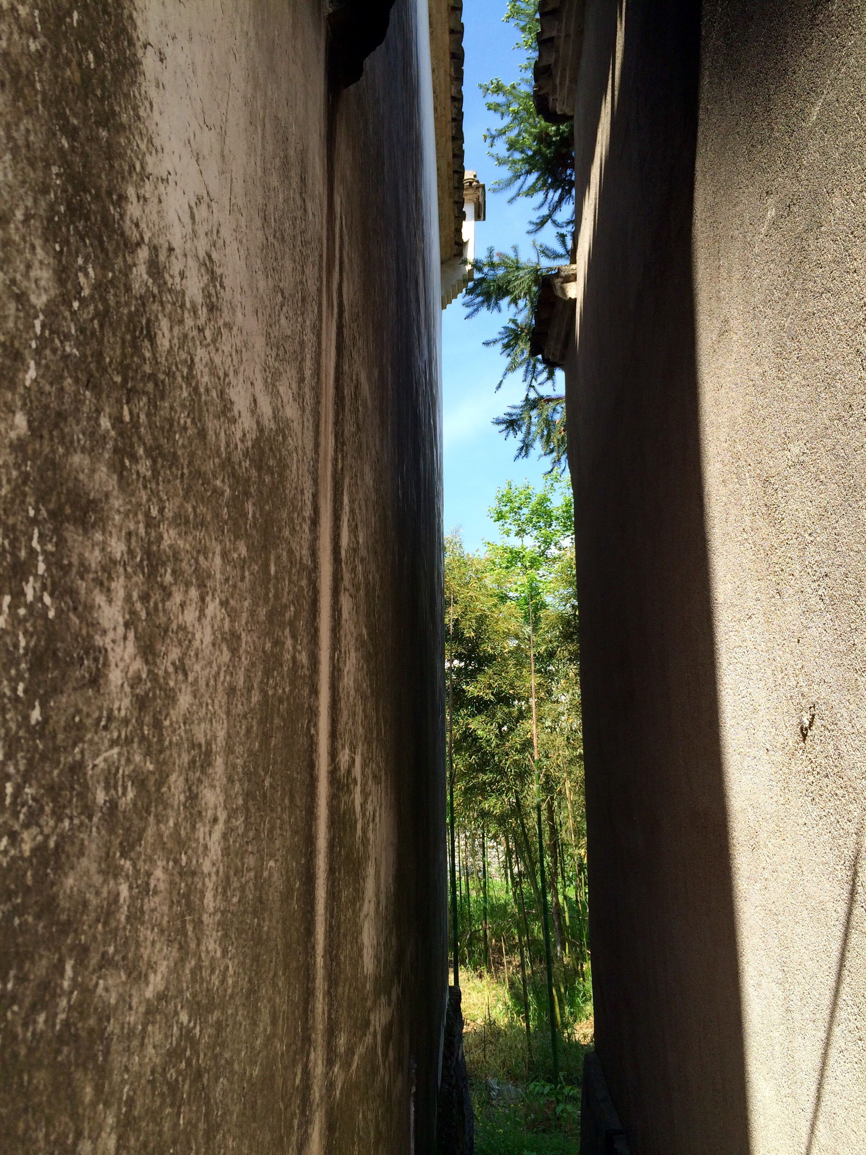 tree, built structure, architecture, building exterior, wall - building feature, window, tree trunk, growth, wall, sunlight, day, shadow, house, no people, textured, outdoors, green color, building, nature, sky