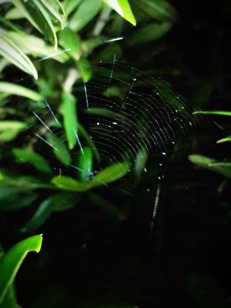 nature, growth, plant, spider web, green color, outdoors, no people, one animal, web, animal themes, beauty in nature, close-up, water, leaf, fragility, day, animals in the wild, spider, focus on foreground, freshness