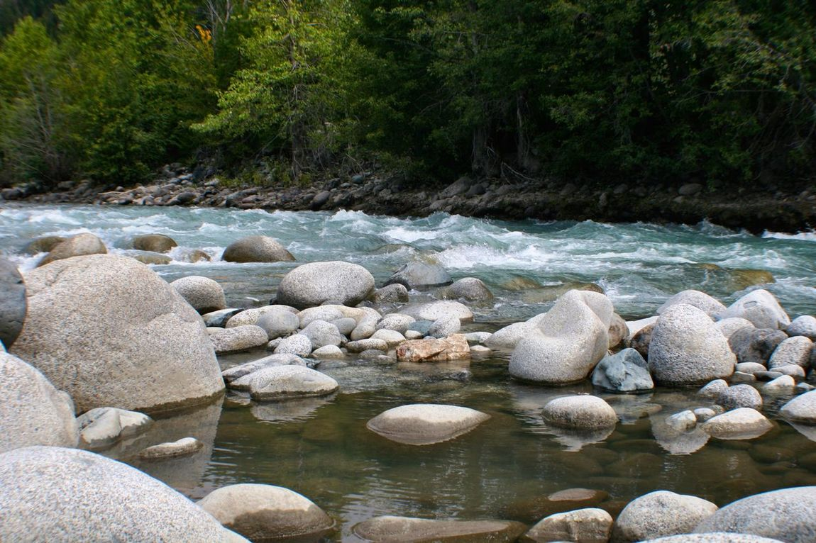 Calm Pool amidst the Rush River Rocks Nature Rushing Water Rocky Stream Calm Water Evergreens