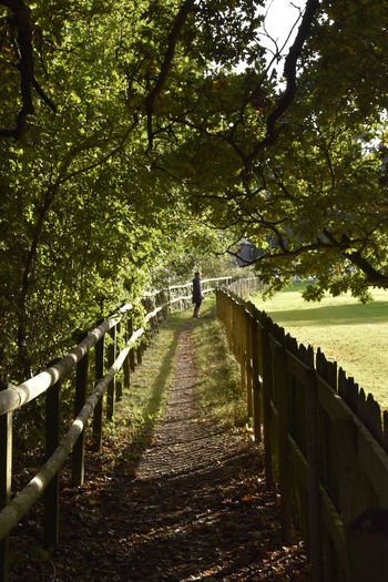 Beauty In Nature Bridge - Man Made Structure Day Earls Colne Essex Fence Footbridge Footpath Green Color Horizontal Nature Oak One Person Outdoors People Railing The Way Forward Tranquility Tree Walk