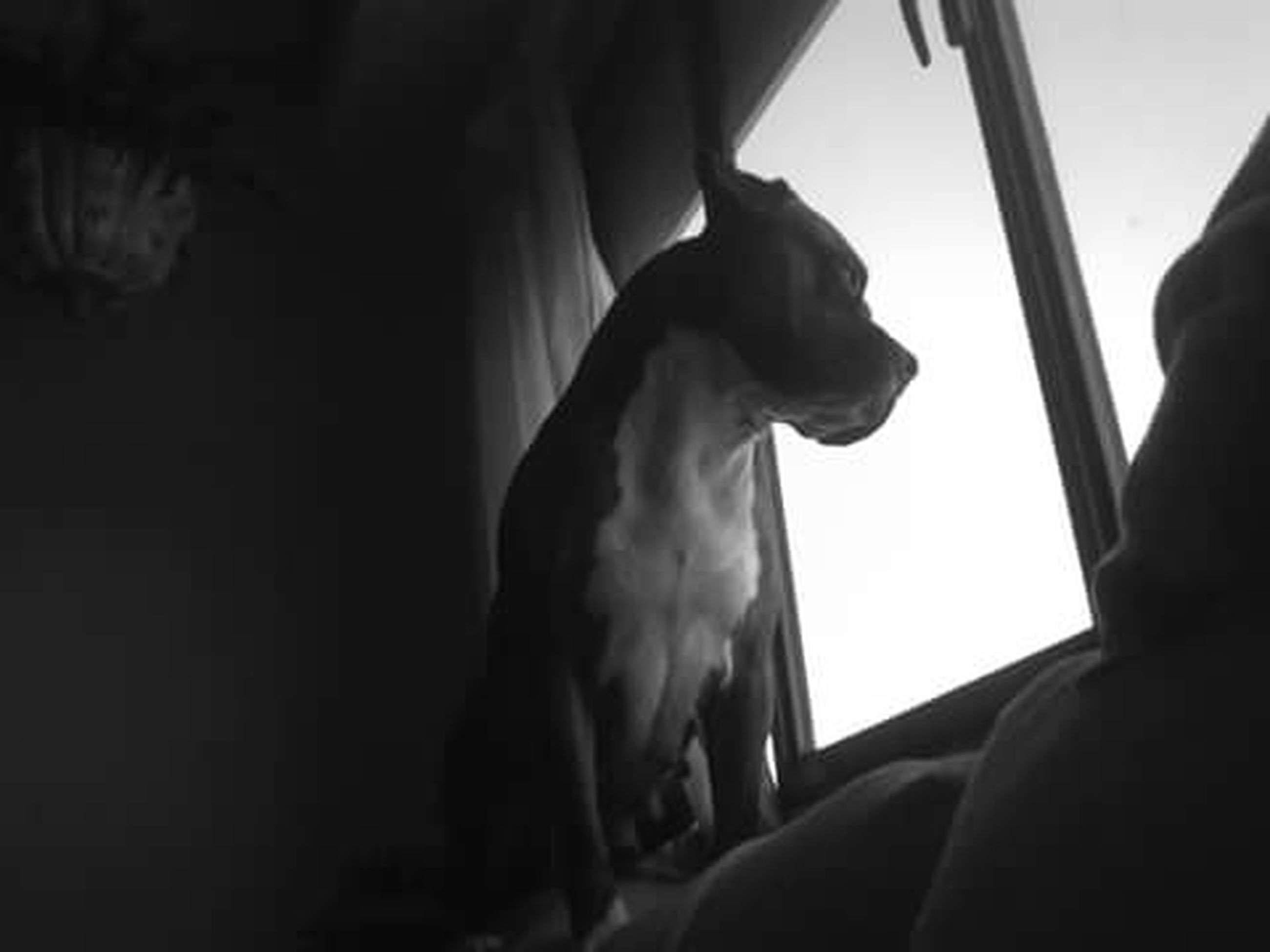 animal themes, one animal, mammal, domestic animals, pets, low angle view, dog, indoors, zoology, sunlight, window, vertebrate, silhouette, sitting, animal head, wildlife, no people, domestic cat, horse, side view