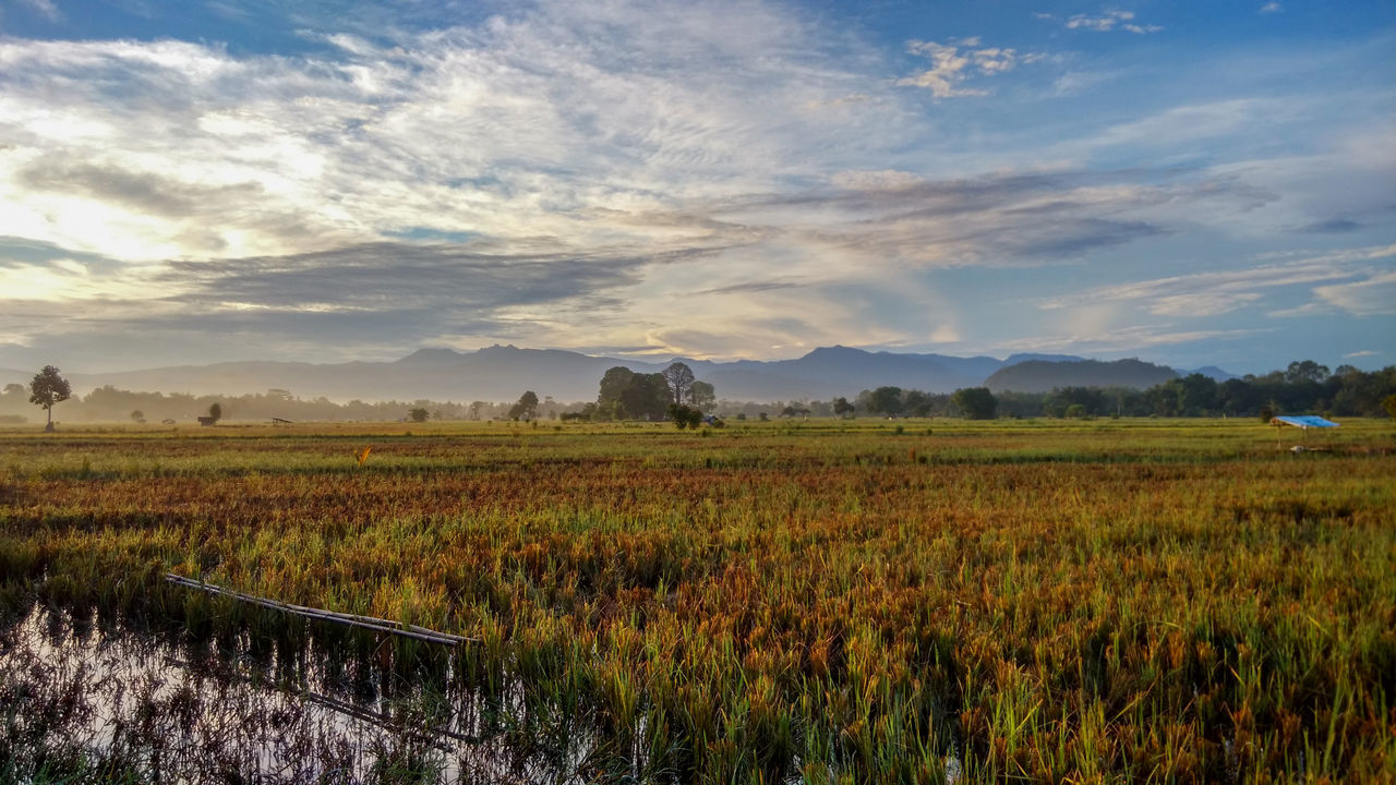 Agriculture Cloud - Sky Clouds And Sky Day EyeEmNewHere Field Full Length Landscape Morning Morning Sky Mountain Nature No People Outdoors Paddy Field Rural Scene Scenics Sky Tranquil Scene Tranquility Water