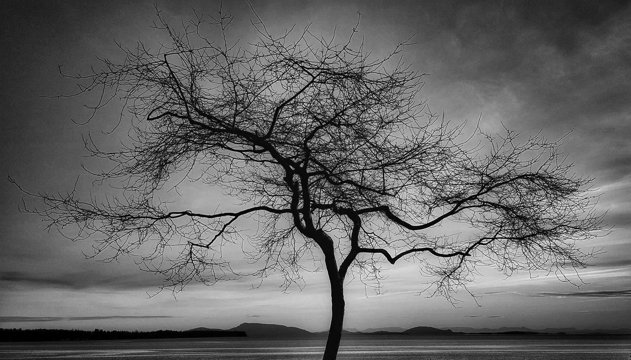bare tree, tree, branch, lone, tranquility, tree trunk, tranquil scene, remote, landscape, isolated, sky, nature, beauty in nature, outdoors, scenics, water, sea, day, no people