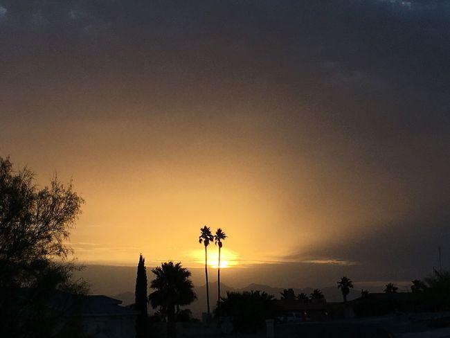 Lake Havasu City, Arizona Sunset Palmtrees