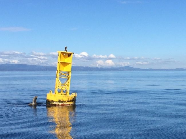 Water Sea Horizon Over Water Seal Marker
