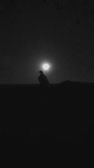 Silhouette Moon Night Outdoors Animal Themes Nature No People Sky Bird The Week On EyeEm Bestsellers 2017 EyeEm Selects Premium Collection Black And White Oneplusphotograpgy Monochrome Bnw_collection Blackandwhite Pigeon Godsent Divine EyeEm Best Shots Cloud - Sky Lowlight Dark
