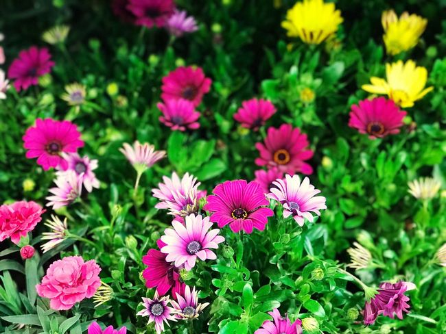 Flower Growth Nature Petal Plant Beauty In Nature No People Outdoors Purple High Angle View Freshness Day Fragility Flower Head Green Color Pink Color Blooming Close-up