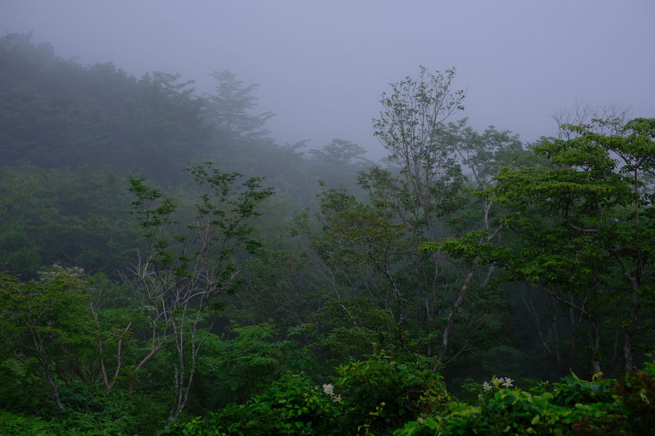 Nasu highlands, Tochigi, Japan. Atmospheric Mood Beauty In Nature Day Fog Forest Fujifilm Fujifilm_xseries Green Japan Landscape Lush - Description Mountain Nature Nature No People Outdoors Pinaceae Pine Tree Pine Wood Pine Woodland Sky Social Issues Space Tree