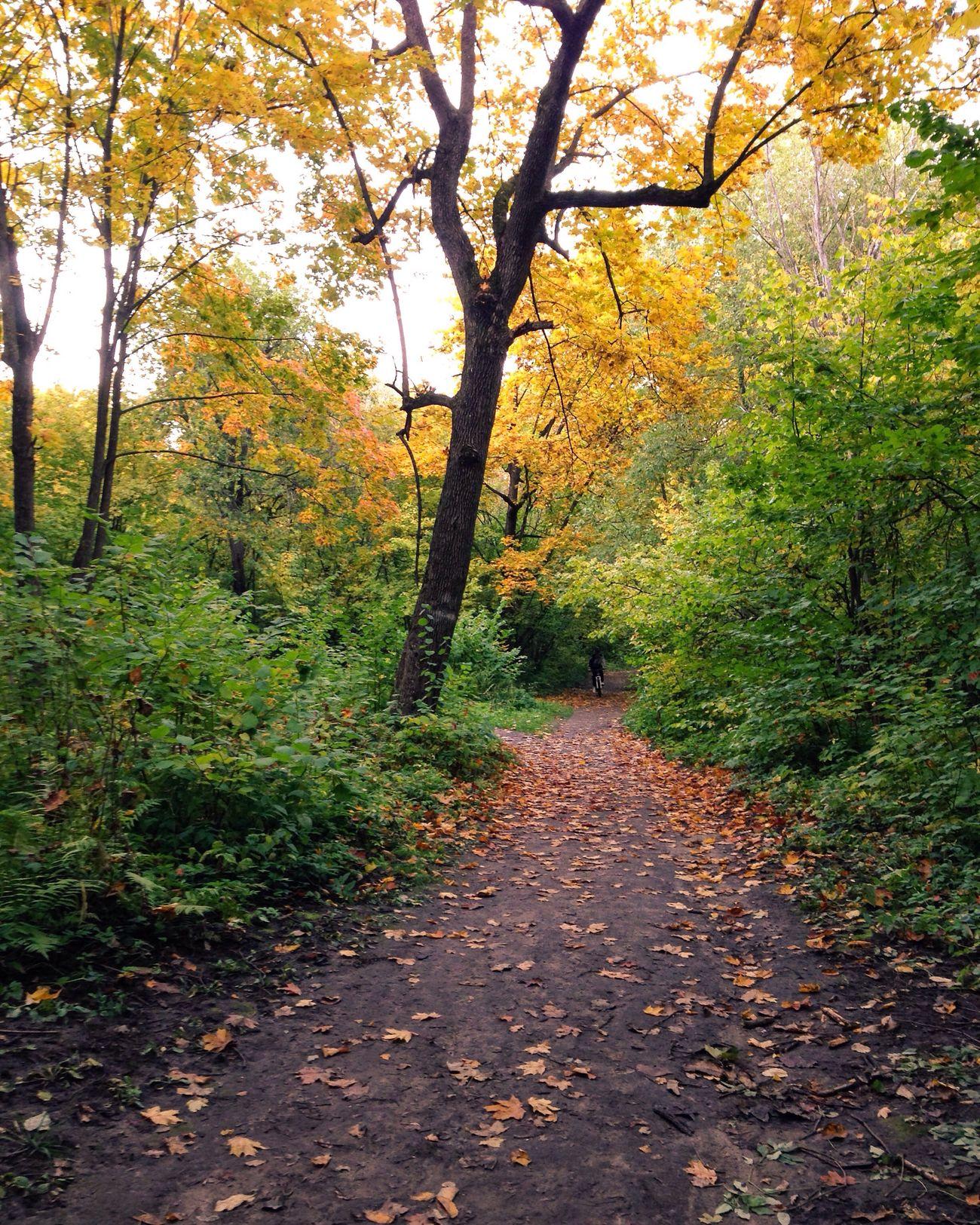 Autumn Nature Tree Day Forestwalk Botanic Flora золотаяосень Лес свежийвоздух