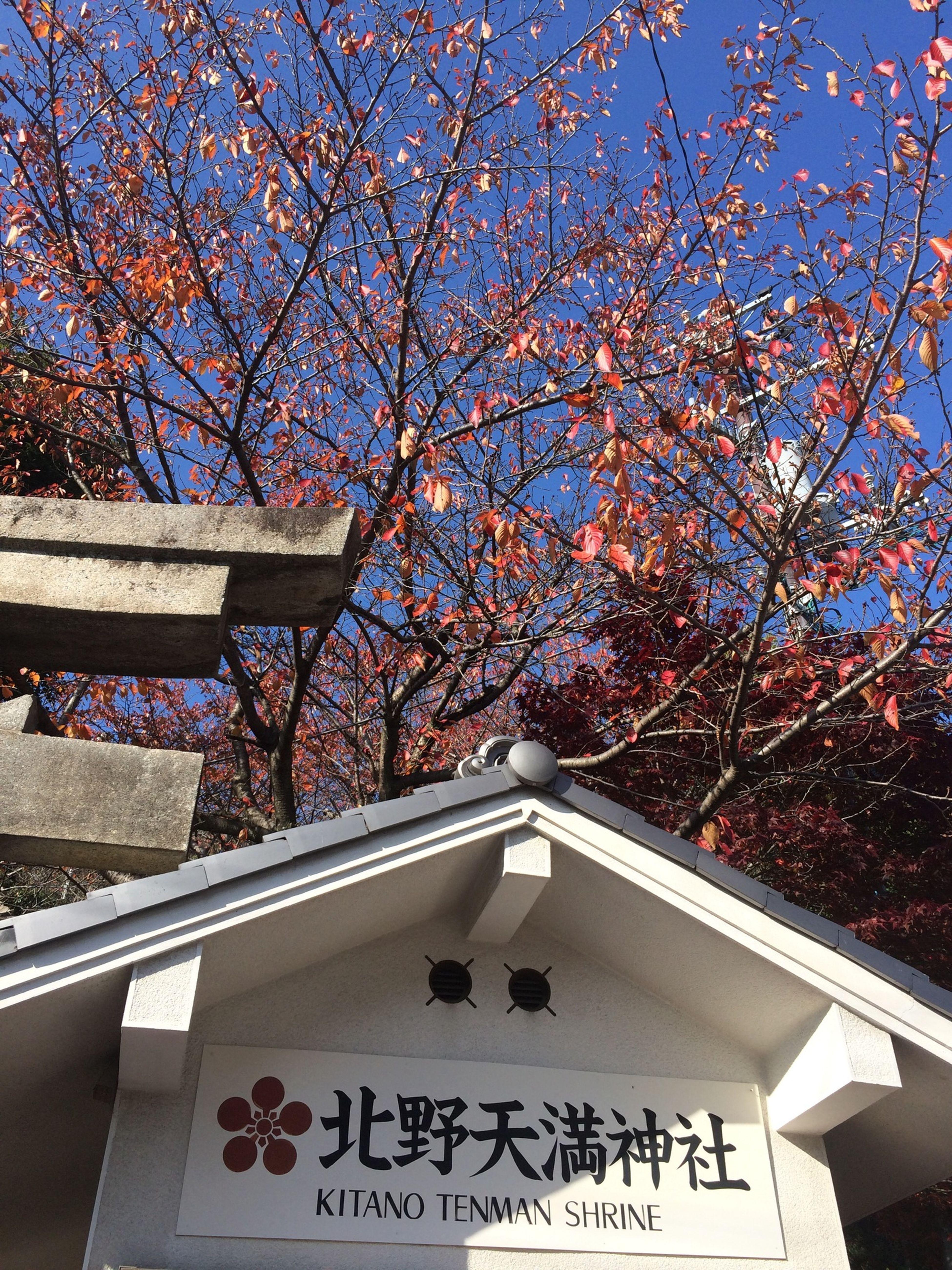 Kitano-cho Bistrotcafedeparis Kitty Temple Kitanocafe (null)