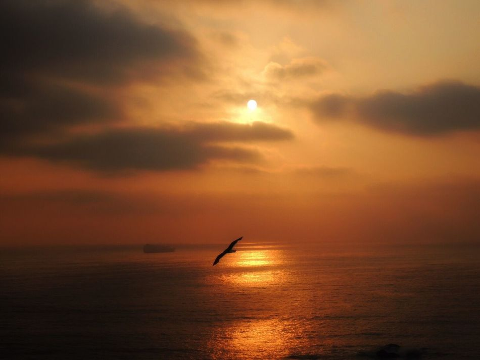 Sunset Sun Sunset Today Sunset Time Sunset_collection Sunset_captures Sunset And Clouds  Sunset And Sea Seagull ın Flıght Sea View... Love It!  Sun Reflection Golden Hour Golden Sunset Golden Light Beautiful Scenery Beauty In Nature Reñaca Beach , Chile