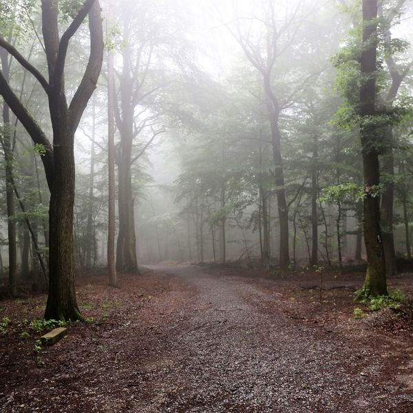 Foggy Forest Creepy Forest Foggy Weather Halloween Halloween Horrors Nebelschwaden Creepy Creepy Atmoshpere Creepy Places Creepy Woods Day Fog Fog In The Trees Foggy Foggy Forest Foggy Forests Foggy Morning Forest Halloween Background Nature No People Outdoors Tree