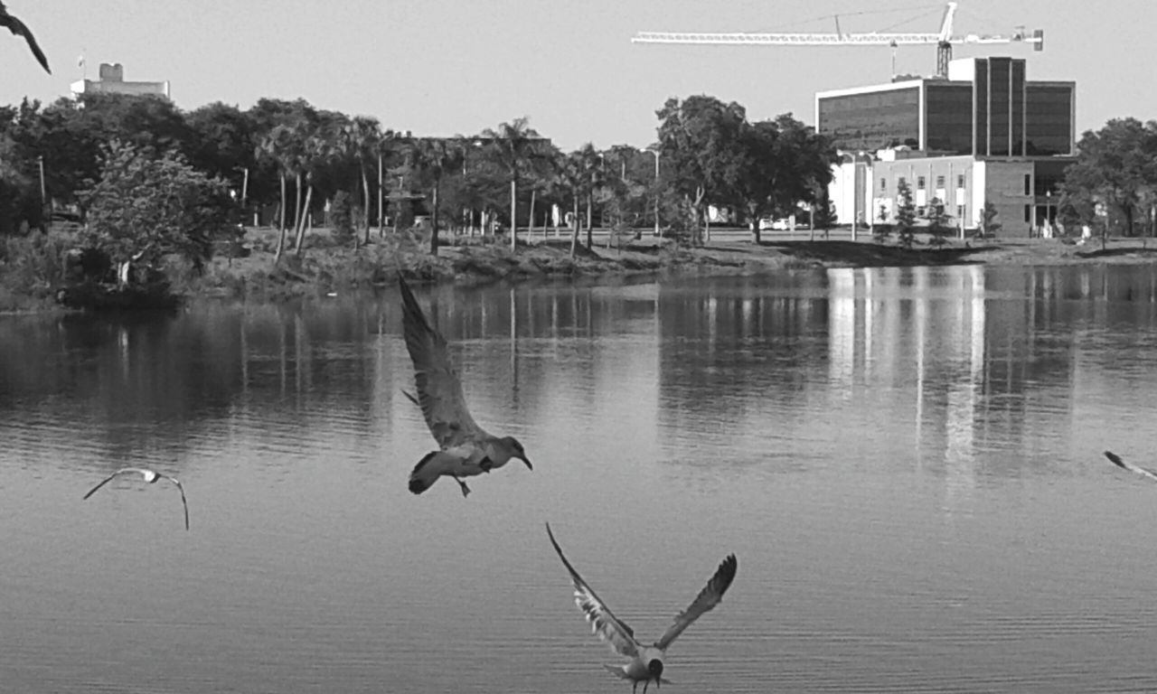 B&W Portrait Birds_collection Water City View