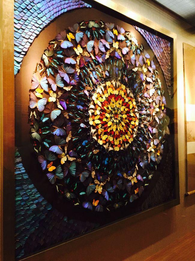 Butterflies Butterfly Collection Butterfly Effect Art Art, Drawing, Creativity Museum Museum Display