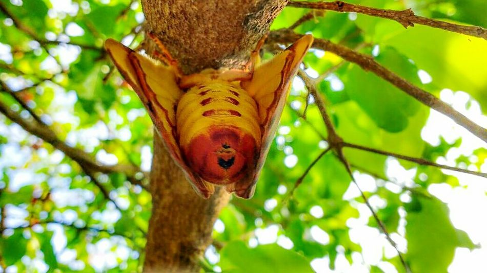 One Animal Nature Tree Day Beauty In Nature Animal Wildlife Tree Trunk Baterfly Garden Baterfly,