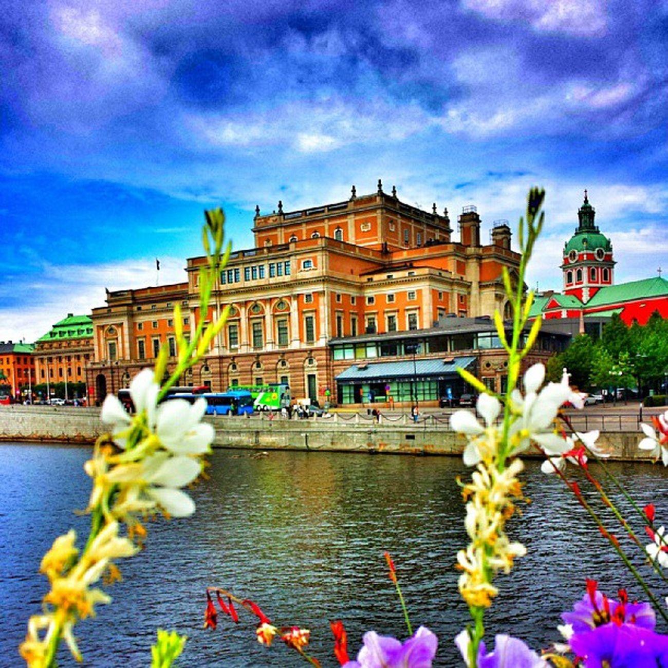 Stockhom Moln BL å Himmel internationalpictures clode sky summer sommar juli sweden sverige blommor blomma flowers